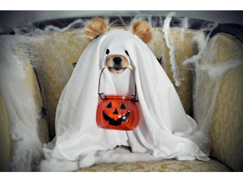 5 Ways to keep pet safe on Halloween